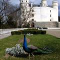 Beautiful castle Orlík. 🙂 . . . . . . . .  #vltavariver #vltavariverig #piseckoblatensko #section4ig #southbohemia …